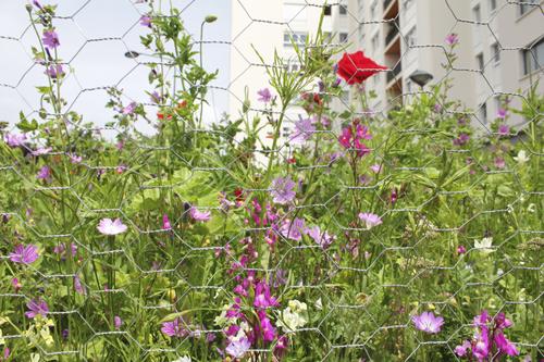 Fleurs StDenis3