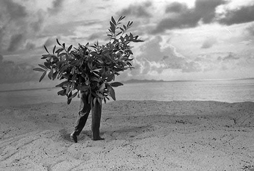 L'arbre qui voulait voir la mer