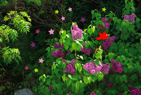 lilas-en-fleurs.jpg