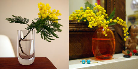 mimosa-x-2.jpg