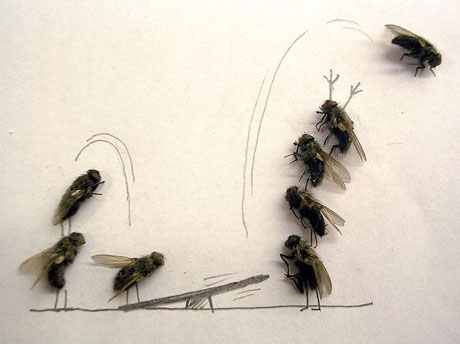 dead_flies_art_05-1