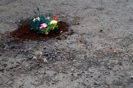 pothole_garden_04
