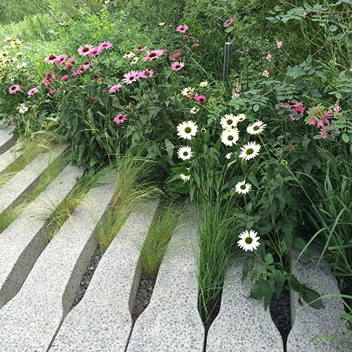 Plantes HighLineL